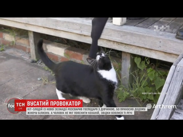 Кіт-злодій із Нової Зеландії розсварив закоханих, бо приніс у будинок чужу жіночу білизну