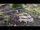 24.09.17 squirrel pest control with ATN Xsight2/edgun leshiy
