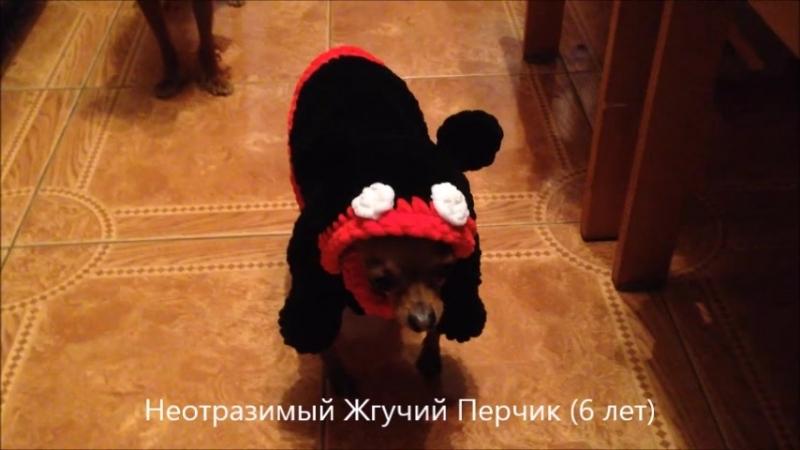 Перчик Микки (6 лет)
