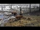 Охотничий дом в лесу с охотой на косулю, кабана, зайца
