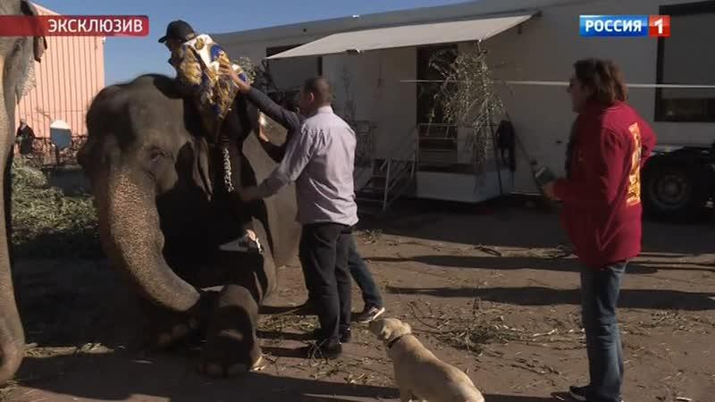 Андрей Малахов и Гия Эрадзе на княжеских слонах