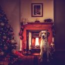 Немного фотошопа и у бродячих собак, из Кипрского приюта…