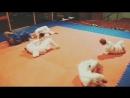 Разминка на детской тренировке Креветка