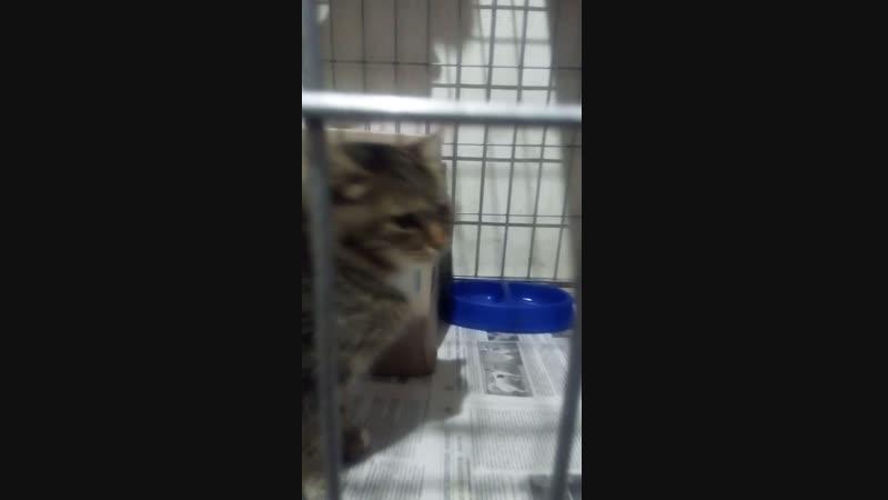 Кошка с травмой глаза будет завтра прооперирована в клинике Айболит