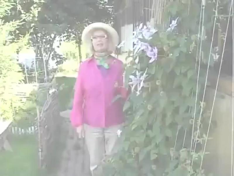 Посадка клематисов и уход за цветами - Школа цветоводства и садоводства