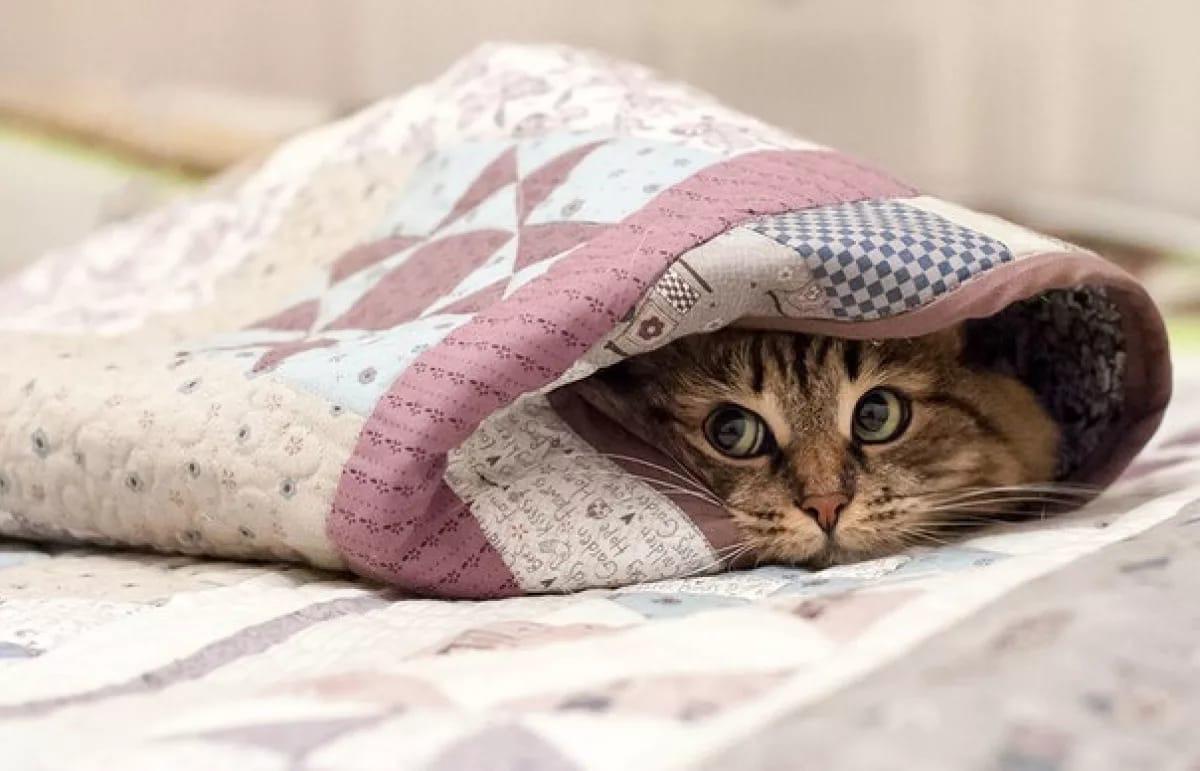 Достаём шапки и перчатки: завтра в Московской области ночью и утром ожидаются заморозки до минус 4 градусов, предупреждает МЧС.