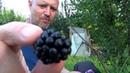 9 Опасный Дагестан Отношение к Гостям в Дагестане Стоимость фруктов в Дагестане Люди Дагестана