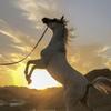 horseSPhoto