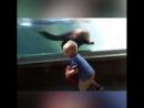 ребятам о морских зверятах
